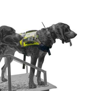 Dog Vest with Camera