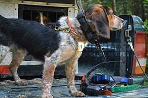 TT15 on Beagle
